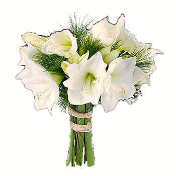 white-amarillys-flowers