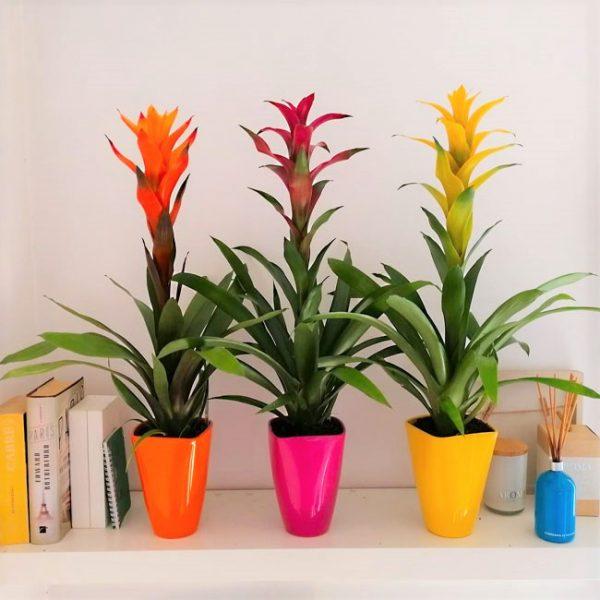 bromeliad-plant-barcelona