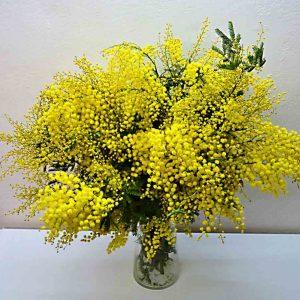 mimosa-arrangement-barcelona