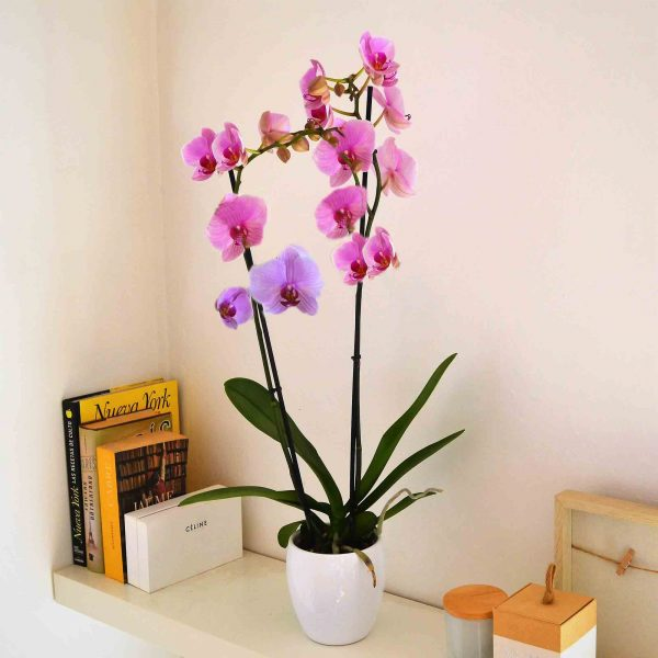 orchid-plant-barcelona