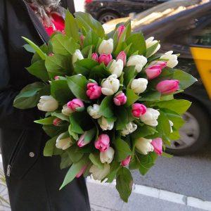 tulips-barcelona