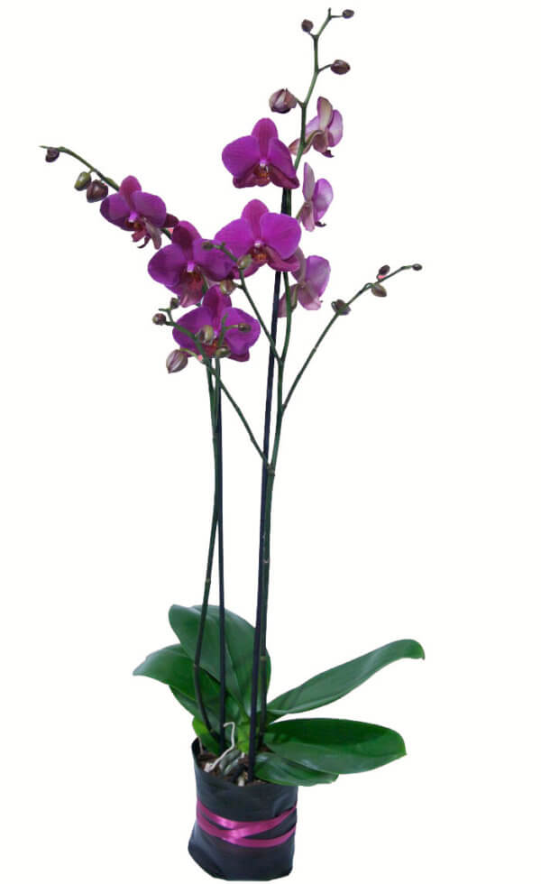 valentine-day-flowers