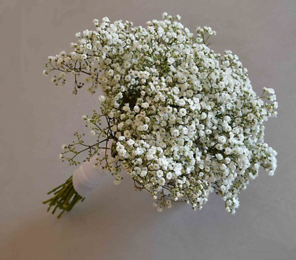 bouquet-girlfriend-paniculata-cheap