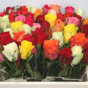 mixed-roses-barcelona