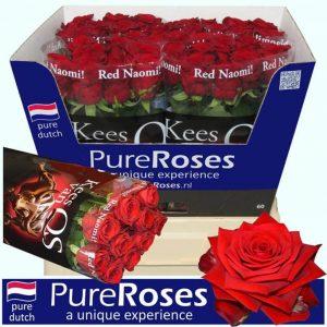 red-roses-barcelona