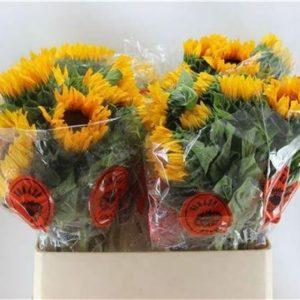 sunflowers-barcelona