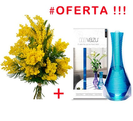 mimosa-with-vase
