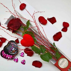 valentine-rose-barcelona