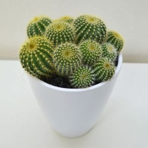 cactus-offer-barcelona