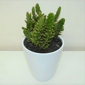 cactus-shop-barcelona