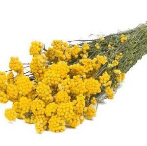 Lona-Dried-Naturel-Yellow