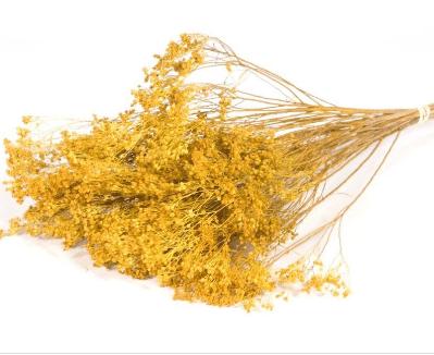 broom-yellow