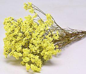 limonium-yellow