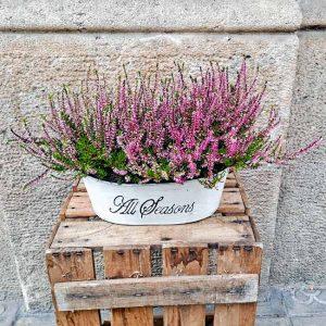erica-plants-barcelona